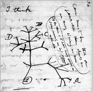 I_Think_Darwin