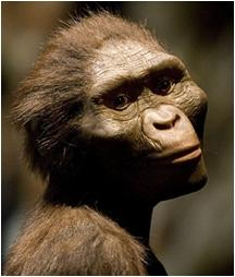 Lovely Lucy Australopithecus afarensis
