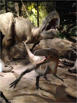 Albertosaurus Evolution Literacy G Paz-y-Mino-C photo