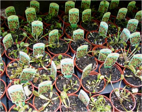 Down House Carnivorous Plants