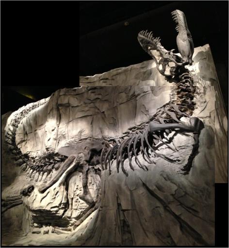 Albertosaurus COMPOSIT Black Lizard Tyrrell Museum Alberta Canada