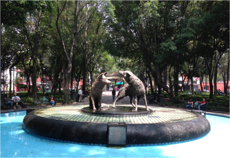 Coyotes of Coyoacan Mexico - Photo G-Paz-y-Mino-C 2015