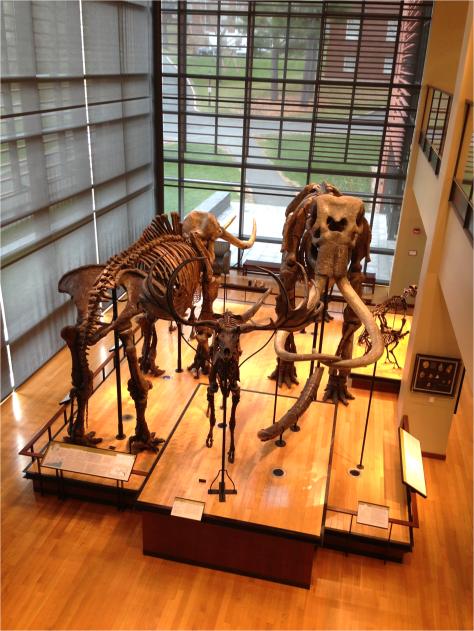 Mastodon Elk Mammoth - Photo G-Paz-y-Mino-C Beneski Museum 2015