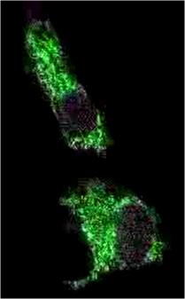 Nano-Lantern PNAS 04 07 2015