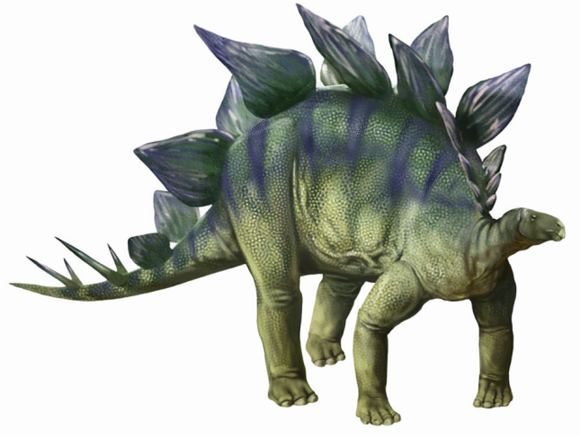 Stegosaurus in color
