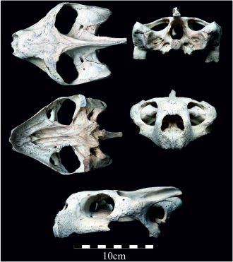 B - New Sp Galapagos Tortoise Chelonoidis donfaustoi PLoS One 2015