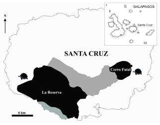 C - New Sp Galapagos Tortoise Chelonoidis donfaustoi PLoS One 2015