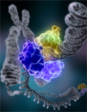 D - DNA Repair image by Tom Ellenberger
