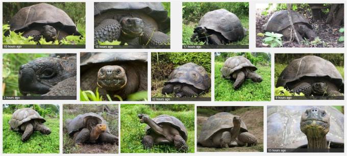 F - New Sp Galapagos Tortoise Chelonoidis donfaustoi PLoS One 2015
