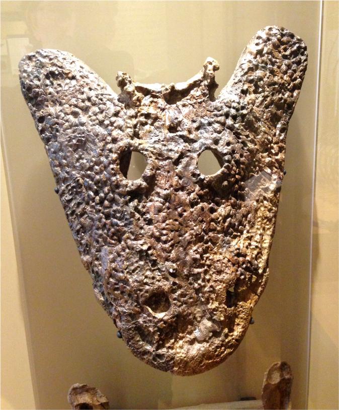Eryops megacephalus - Photo G-Paz-y-Mino-C Beneski Museum 2015