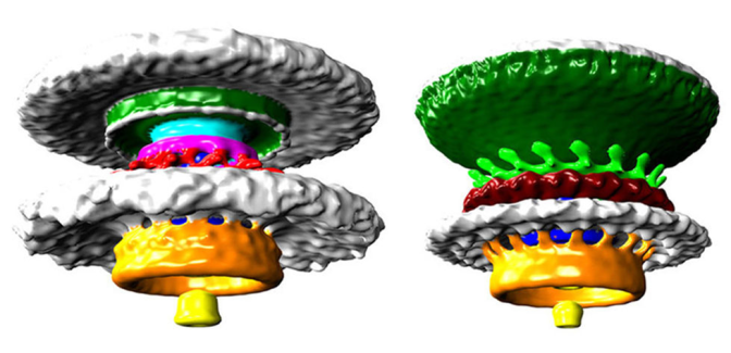 3D model bacterial propeller By Morgan Beeby Imperial College London