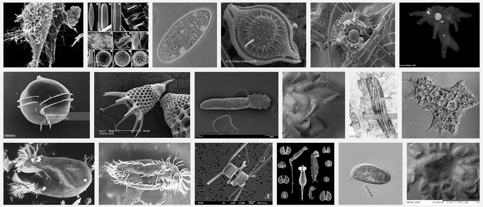 unicellular organism essay This microscopic organism is helping to fill the evolutionary gap in our understanding the two year research project was a global collaboration between kansas state university, universities of.