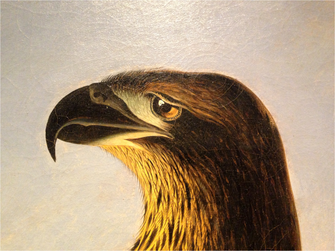 Washington Sea Eagle National Portrait Gallery - Photo G-Paz-y-Mino-C 2016