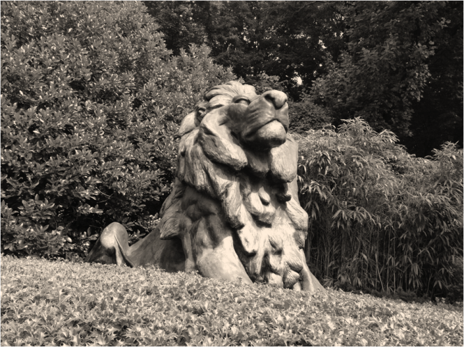 Welcoming Lion National Zoo Washington DC - Photo G-Paz-y-Mino-C 2016