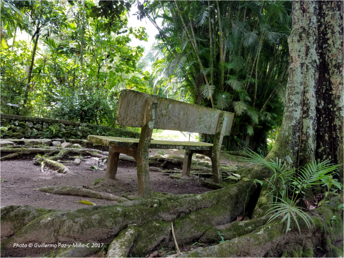 bench-at-castleton-botanic-gardens-photo-g-paz-y-minoc-2017