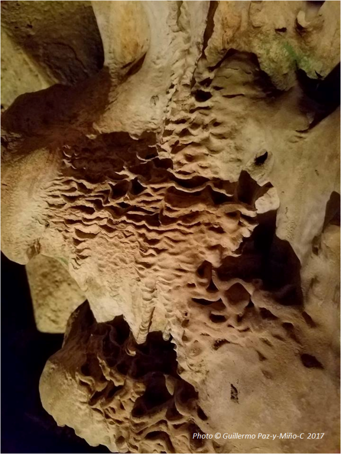close-up-wall-green-grotto-caves-photo-g-paz-y-mino-c-2017