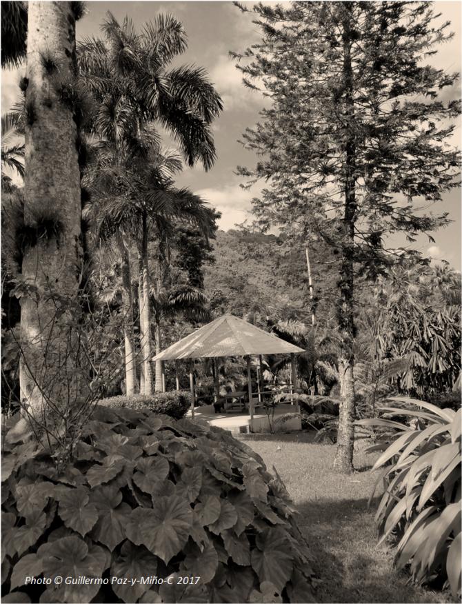 gazebo-at-castleton-botanic-gardens-photo-g-paz-y-minoc-2017