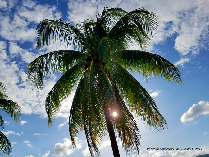 palm-at-port-antonio-jamaica-photo-g-paz-y-mino-c-2017