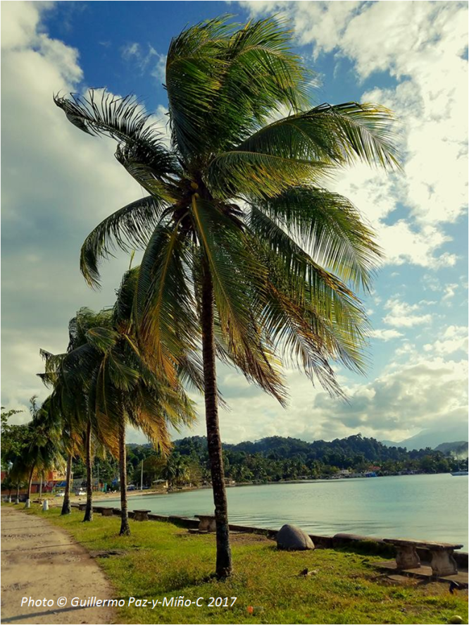 palms-port-antonio-jamaica-photo-g-paz-y-mino-c-2017