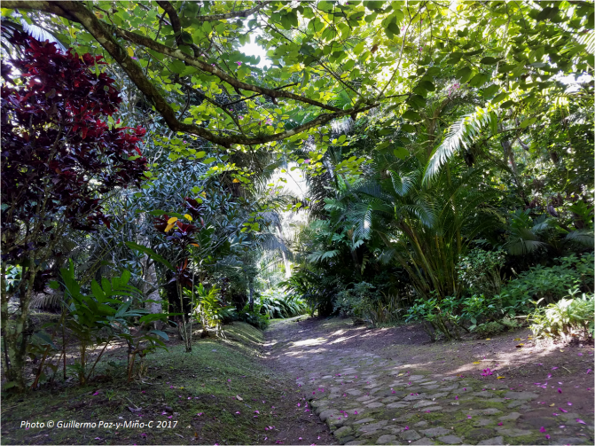 path-at-castleton-botanic-gardens-photo-g-paz-y-minoc-2017